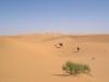 Algeria- cammino nel deserto