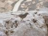 Israele-Neghev, vita nel deserto