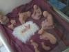 Betlemme- presepe piccole sorelle