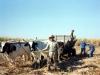 Argentina- lavoro rurale