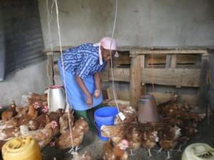 Nigeria- nel pollaio