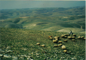 deserto di Giuda