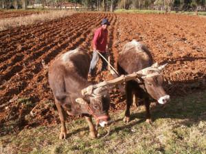 lavoratore dei campi