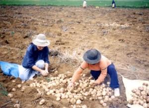 Perù- lavoro nei campi
