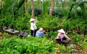 Vietnam- passaggio nella foresta