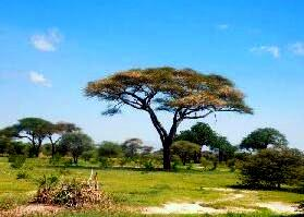 Burkina Faso- savana