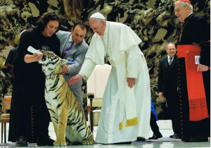 Il tigrotto e il papa